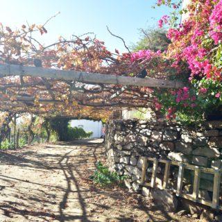 N Cape  Irrigation  Wine Route  Upington  Farm  Die Maas