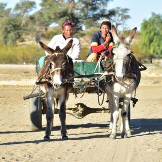 N Cape Kalahari  Andriesvale Donkey Cart